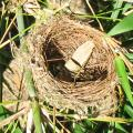 PHOTO OF VACATED NEST: BIRDS LOVE BAMBOO