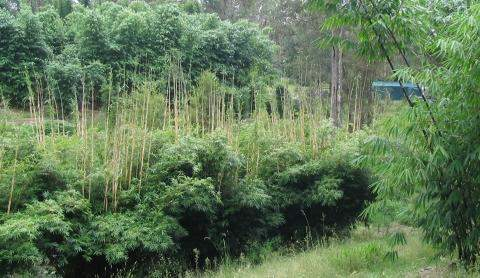PHOTO OF OUR HOME SWEET HOME: BAMBOO AND BUSHLAND